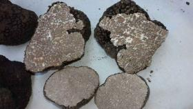 Fresh Black Truffles (1)
